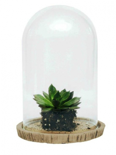 succulents-nature-cloche.jpg